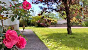 The Lovespoon House garden.