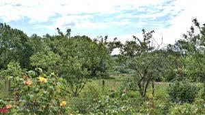 The Lovespoon House garden views.